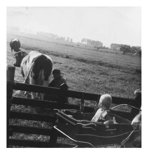 Jeugdfoto, opa is zijn koe aan het melken ik kijk vanuit de kinderwagen naar opa.