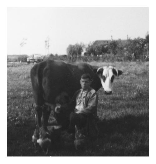 Jeugdfoto, opa melkt zijn koe de kippen lopen erbij.