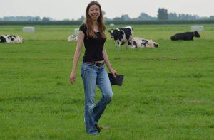 Ik loop in een weiland tussen de koeien.