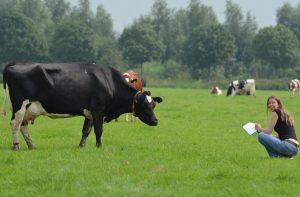 Ik zit in een weiland te schetsen en een koe kijkt mij aan.