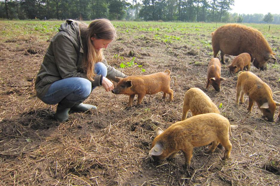 Weiland met biggen en moeder varken en ik aai een big.